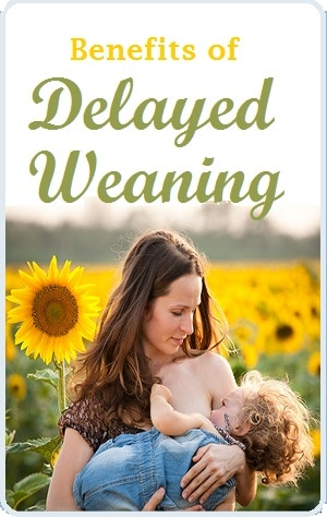 Benefits of Delayed Weaning