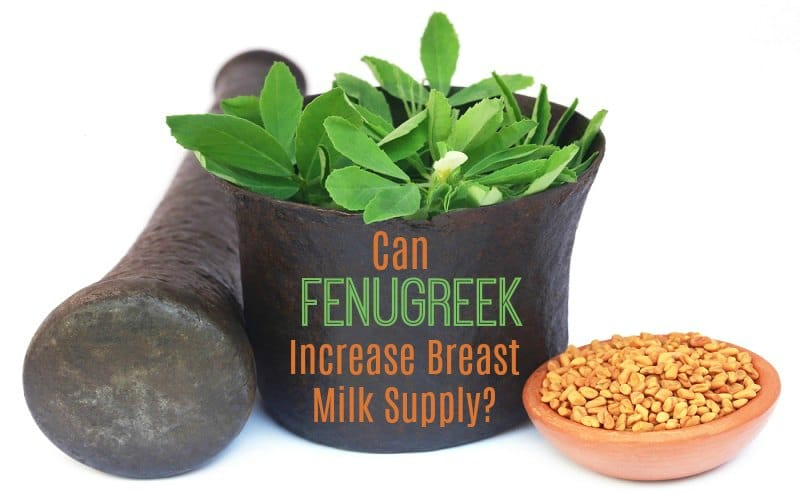 Fenugreek to Increase Breast Milk Supply When Breastfeeding