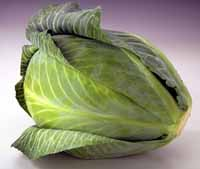 Use Cabbage!